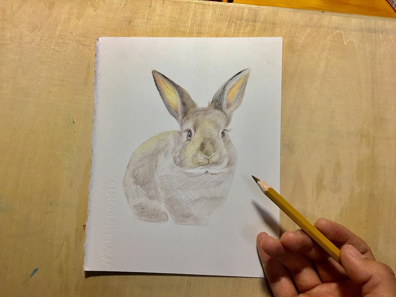 一只呆萌的小兔子