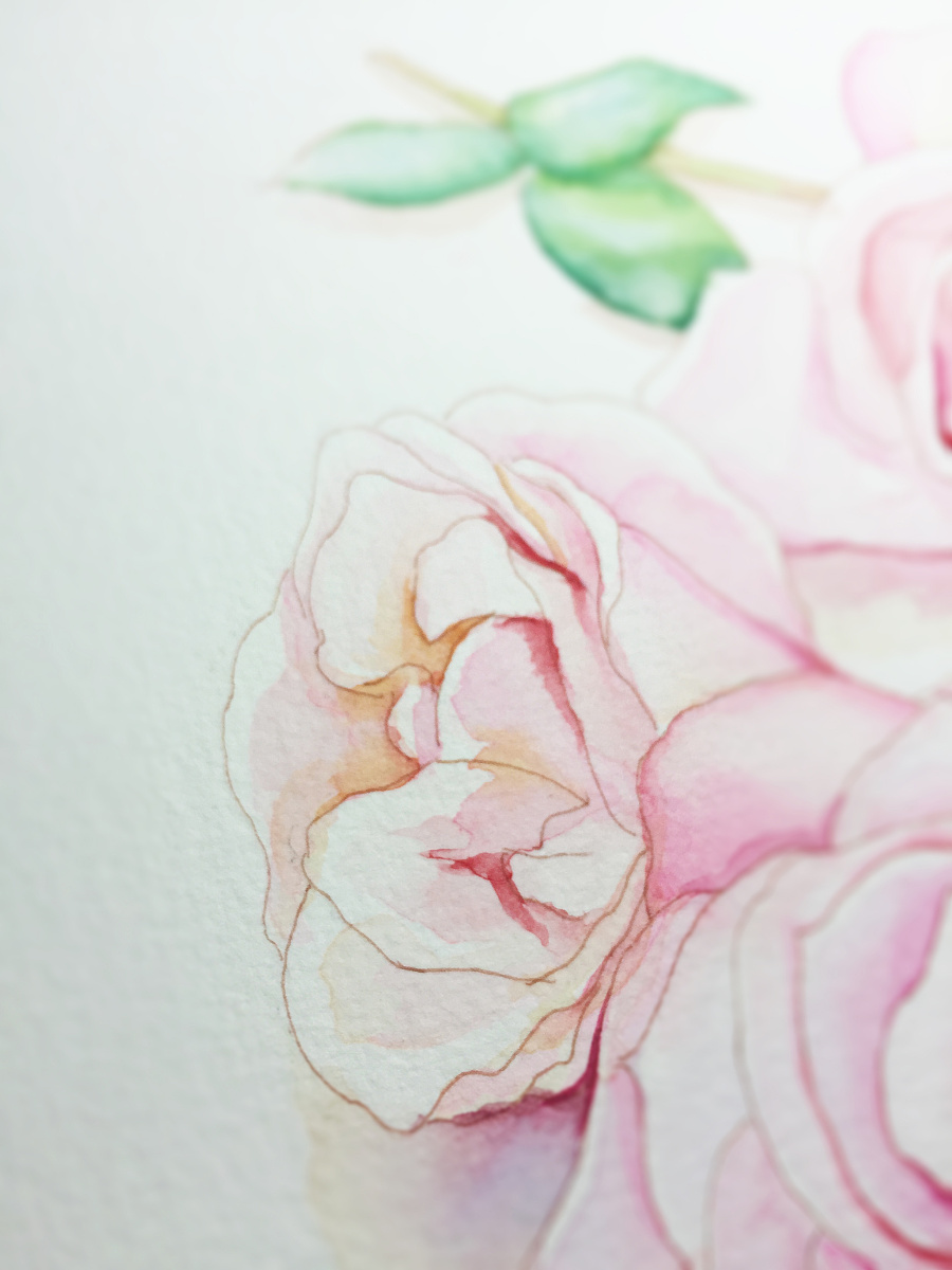 水彩手绘--花 水彩 纯艺术 蒲之未落
