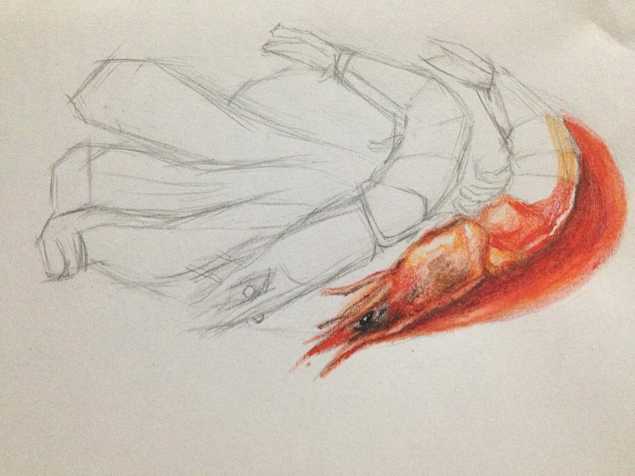 手绘美味佳肴——番茄虾