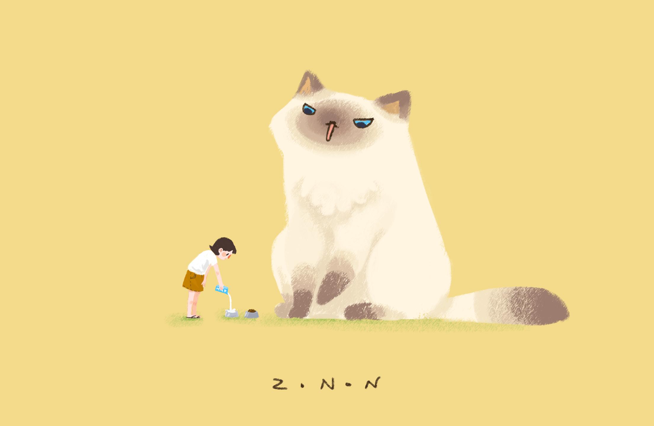 猫怎么安装猫要图解