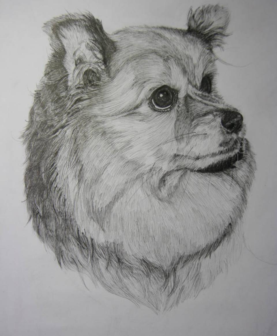 狗笔画图片