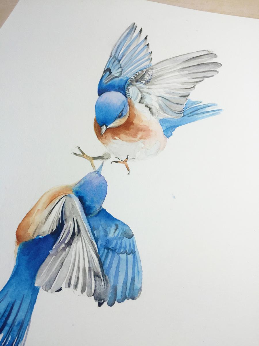 水彩手绘--鸟|水彩|纯艺术|蒲之未落