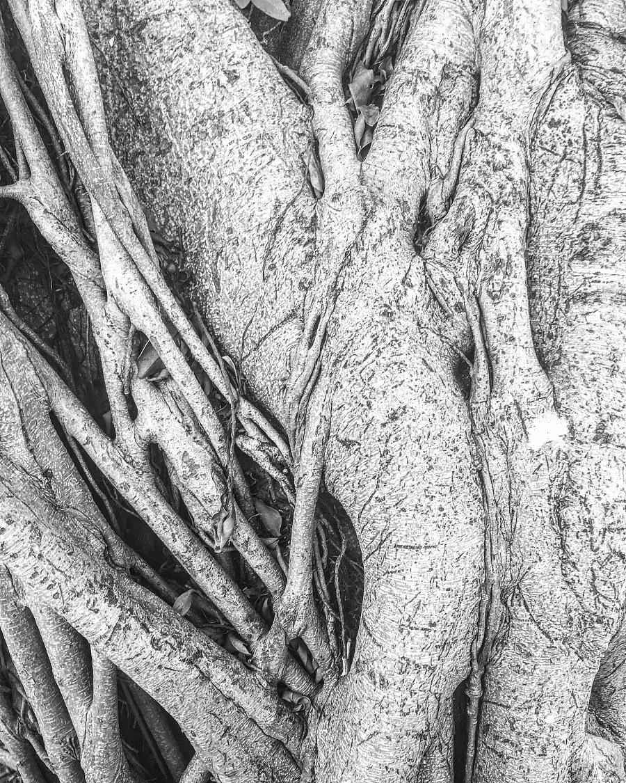 查看《树纹之恋》原图,原图尺寸:2448x3059