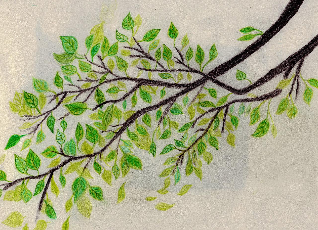 自己手绘素描与彩铅