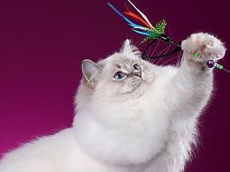 猫的长海报