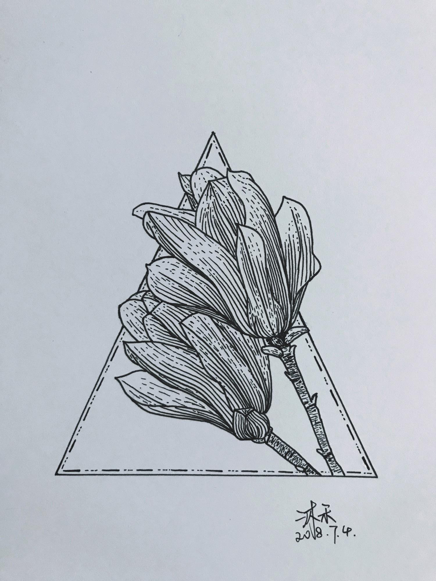 针管笔画——玉兰花