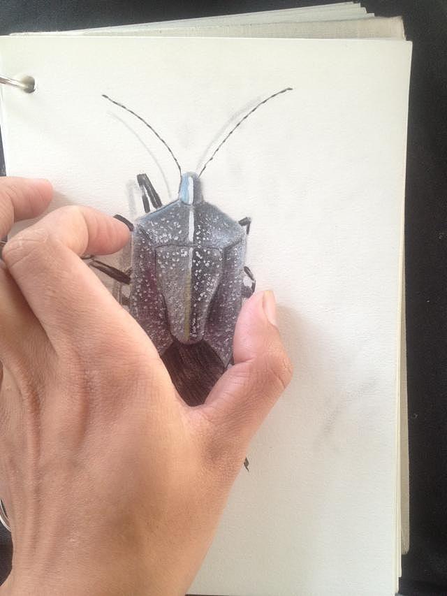 我的手绘昆虫
