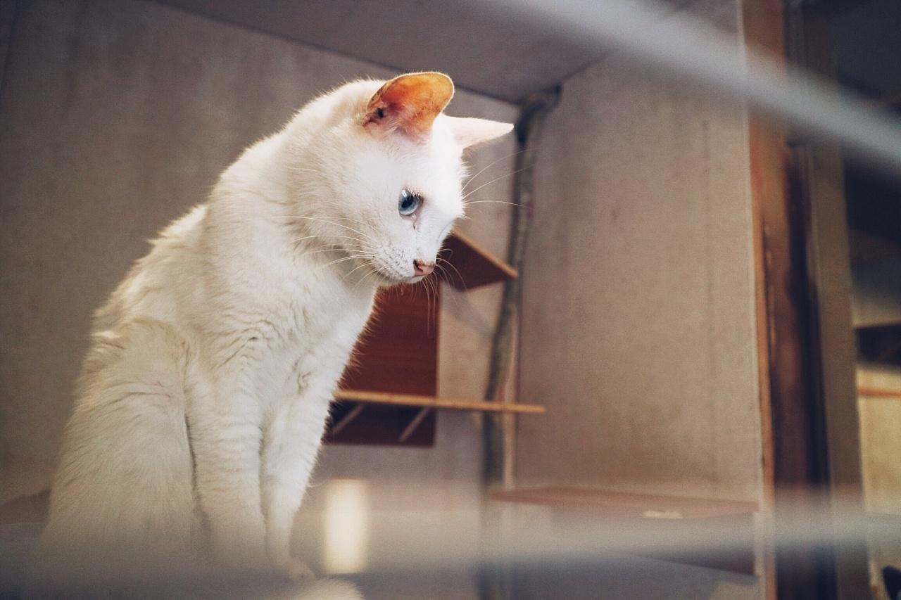 撸猫和芒果茶图片