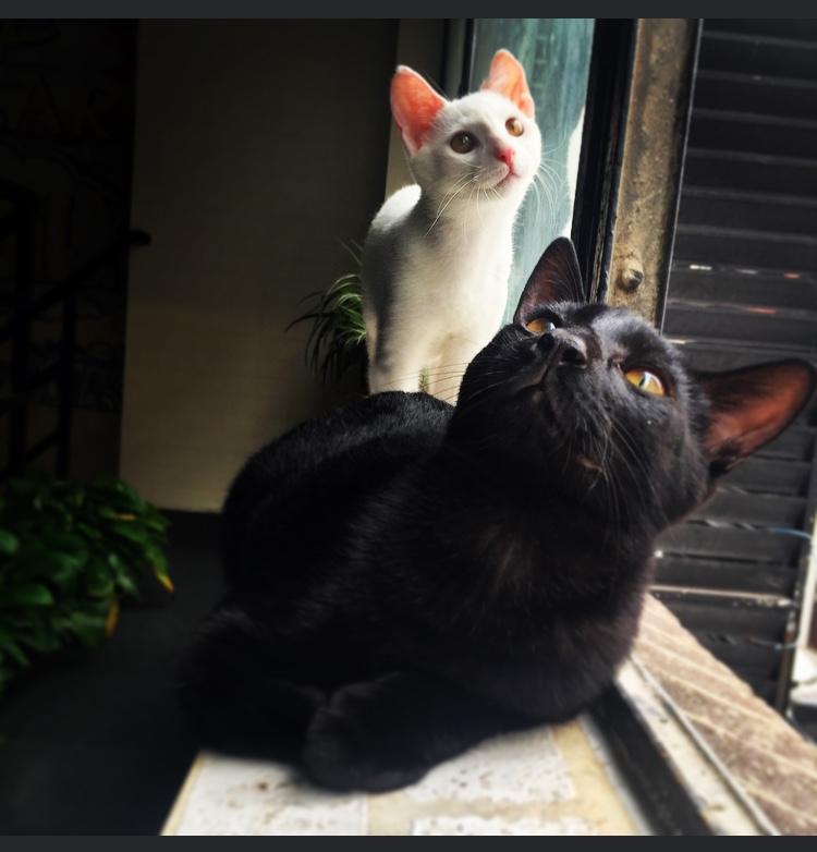 手机镜头里の私家喵|宠物/动物|摄影|miyazzang