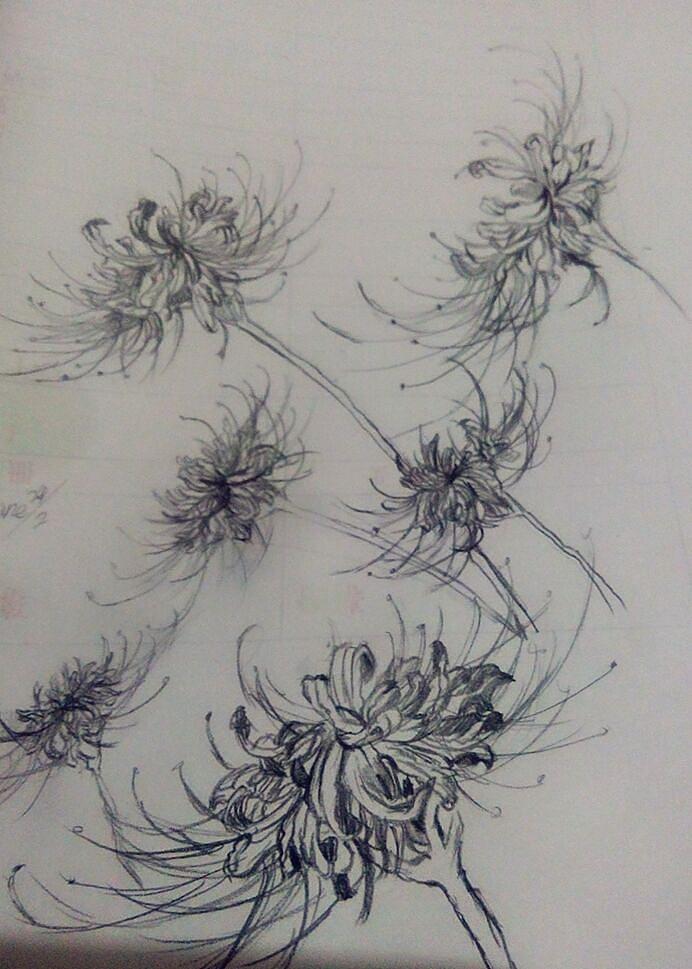铅笔画彼岸花