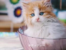 碗里的小奶猫