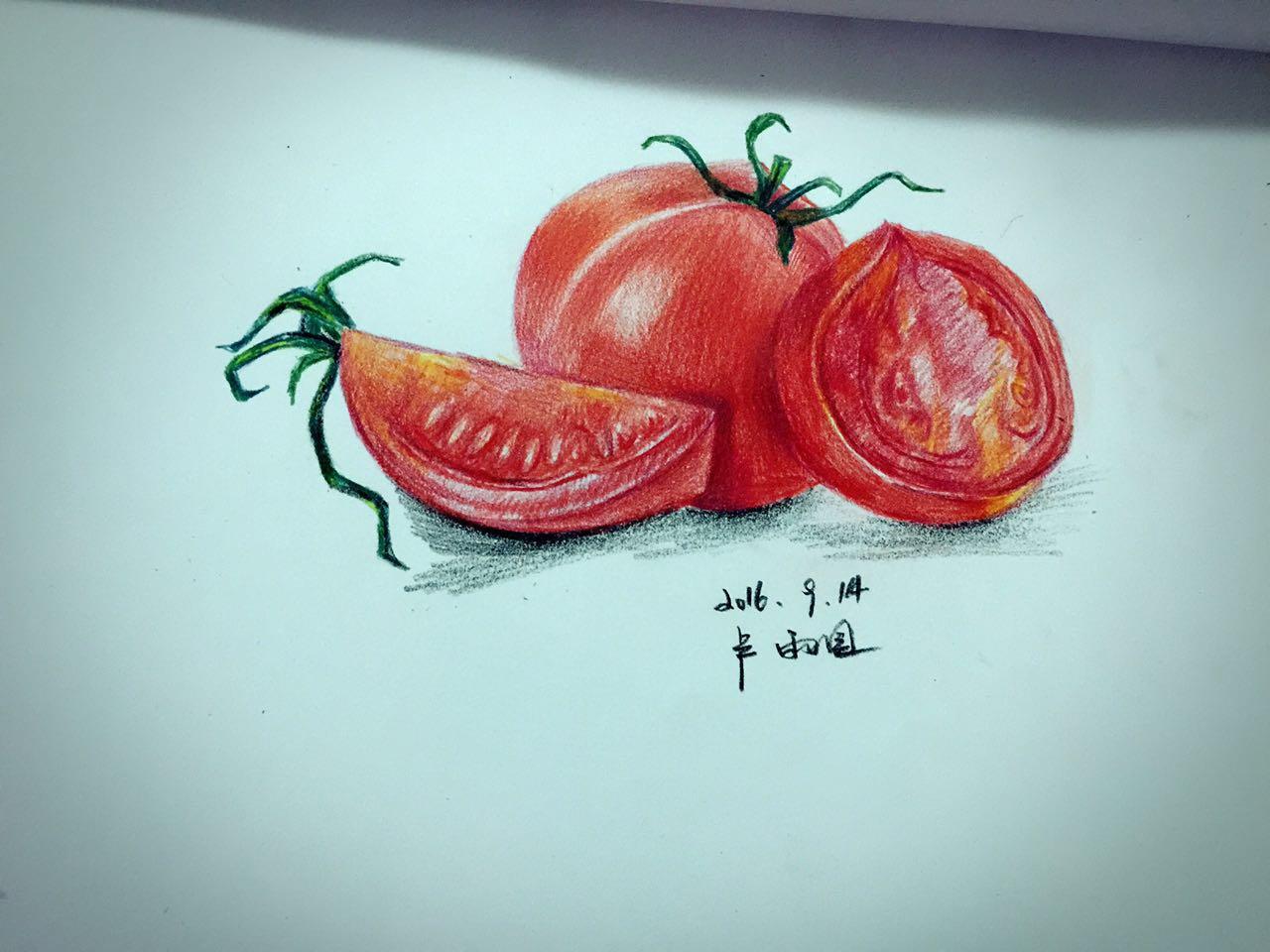 手绘西红柿 彩铅作品