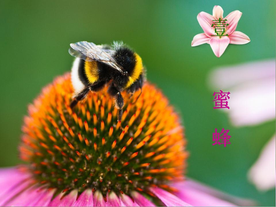 蜂之恋|平面|品牌|雪月清 - 原创作品 - 站酷 (ZC