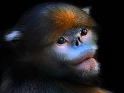 一张丨黔金丝猴肖像