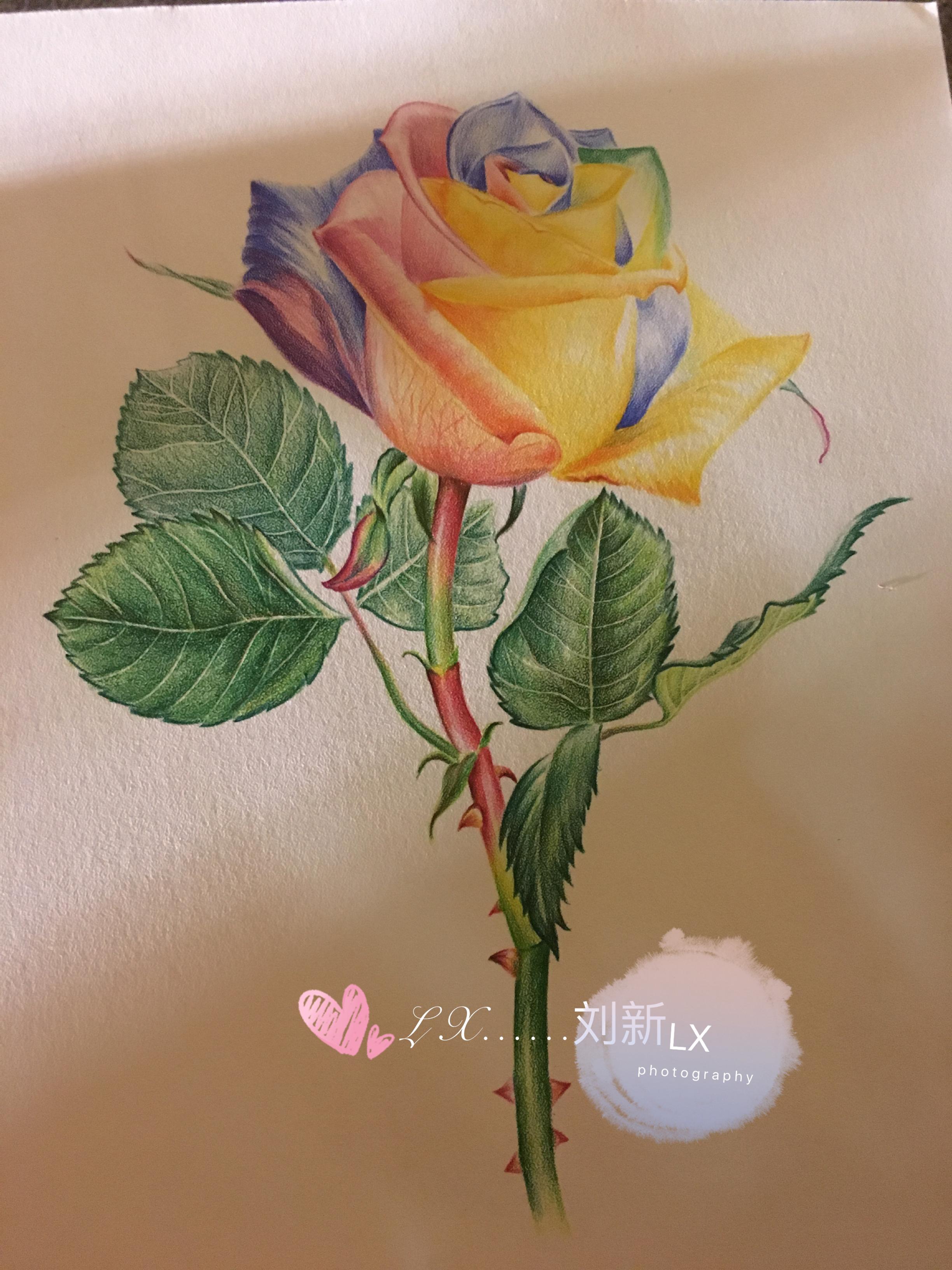彩色玫瑰花|纯艺术|彩铅|刘新ix - 原创作品 - 站酷