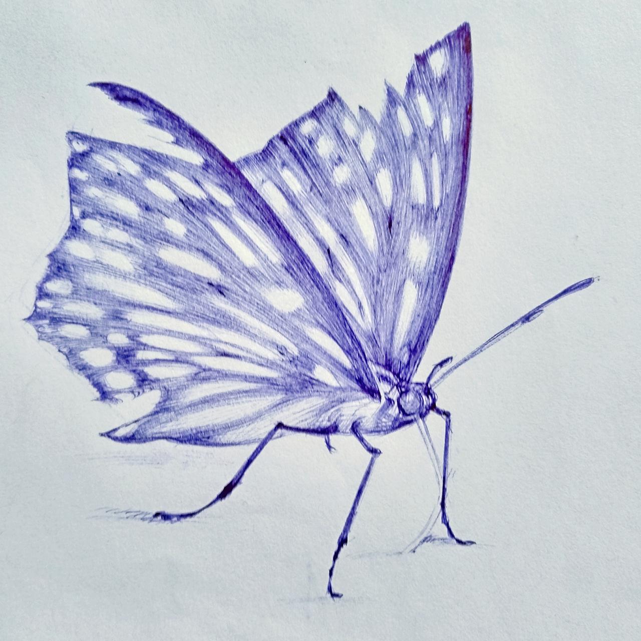 蝴蝶油笔画