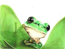 【驴大萌彩铅175】手绘可爱小动物 青蛙 呱儿子