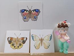 蝴蝶和鱼小画片