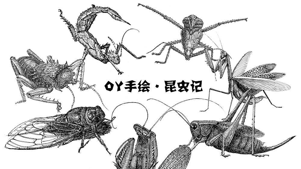 OY手绘 昆虫速写