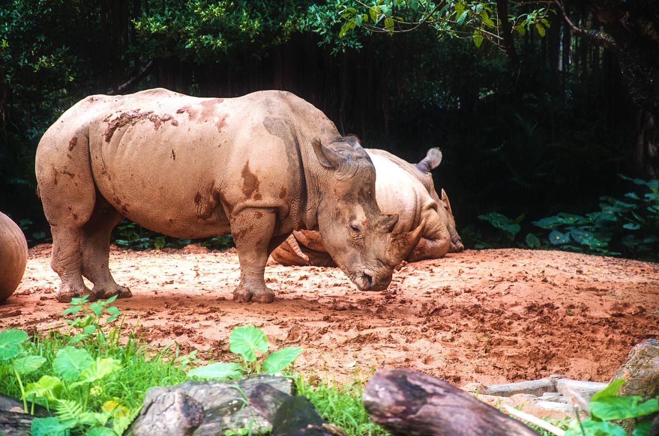 长隆动物园旅游记