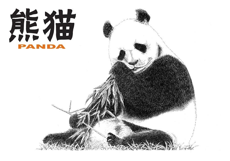 手绘熊猫 明信片|钢笔画|纯艺术|慢游 - 原创设计作品