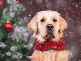 2018圣诞合集第二弹丨你的圣诞礼物又双叒叕到啦!