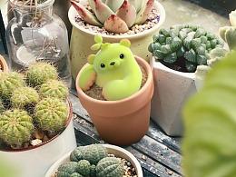 【萌芽熊童子】惊,我家养的小植物竟然活了