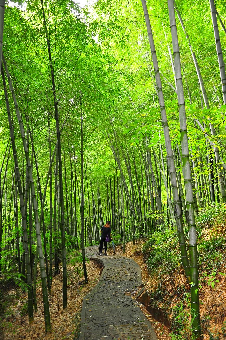 壁纸墙贴 高清竹林风景时尚电视背景墙装饰画已下载22次超大高清竹林