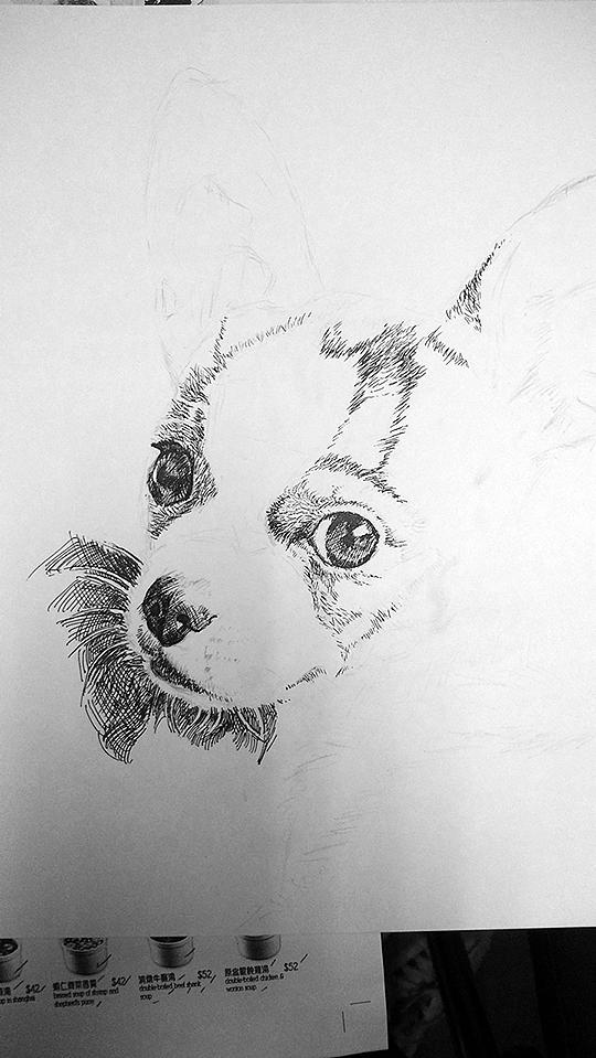 钢笔画 水笔画 处女作,自家的吉娃娃小狗