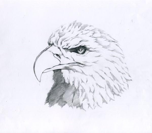 简单铅笔画 手绘