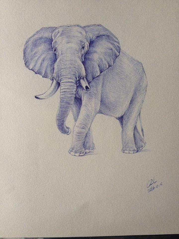 圆珠笔手绘大象,,,
