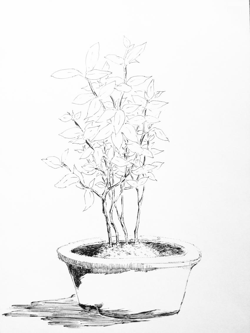 不在面前的盆栽植物