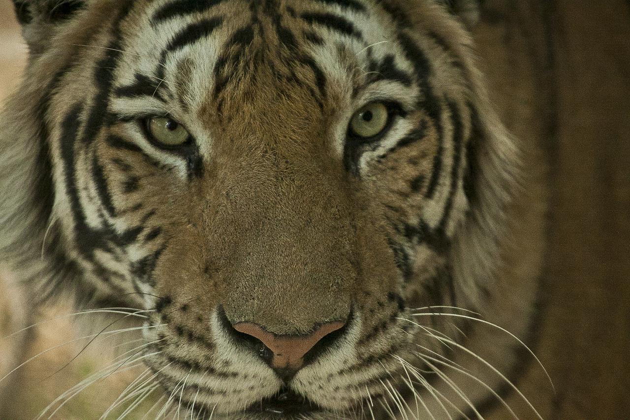动物摄影|摄影|动物|摄影设计老师王林 - 原创作品