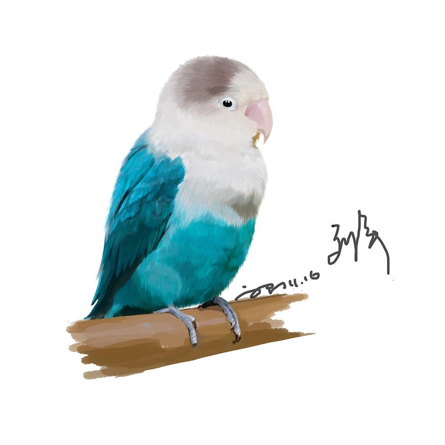 原创作品:手绘鹦鹉