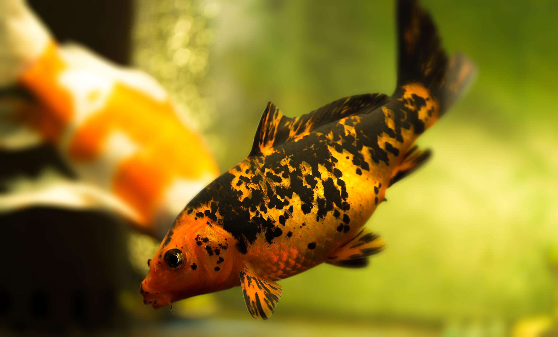 小鱼公式口诀图解