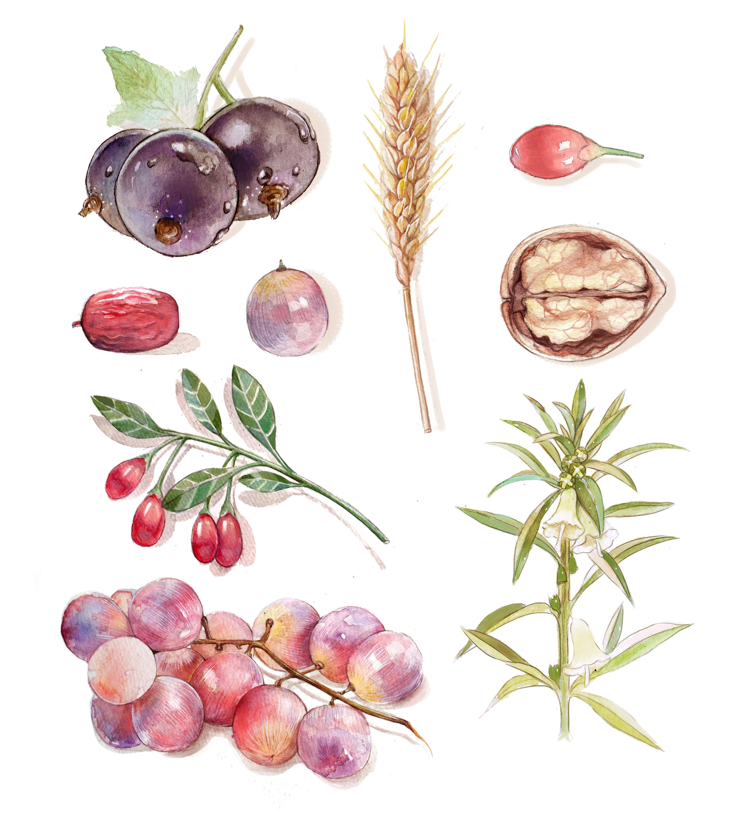 手绘植物水彩插画