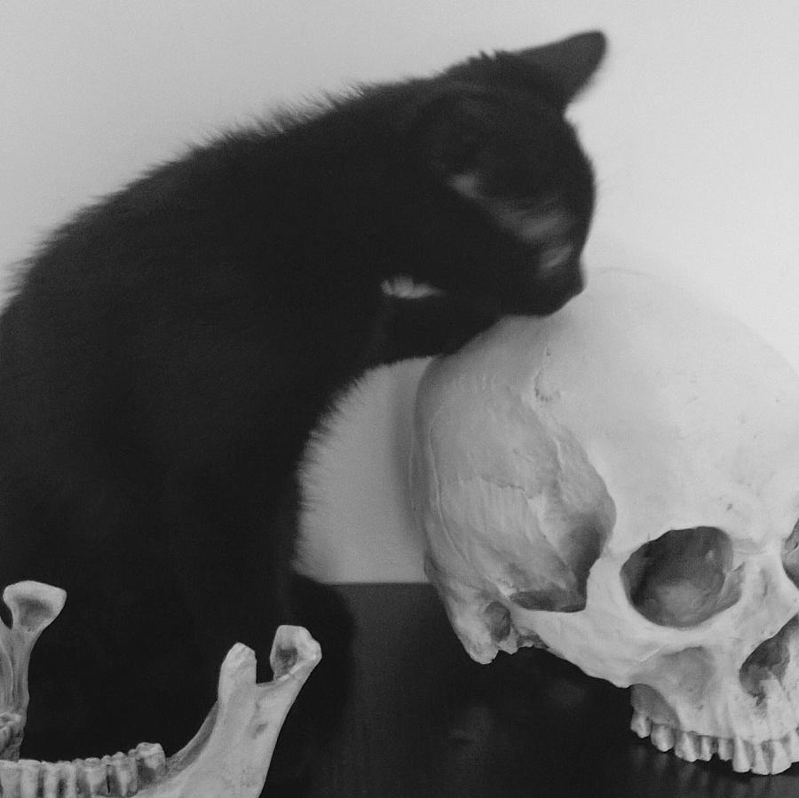 killer|动物|摄影|snaky_z - 原创设计作品 - 站酷