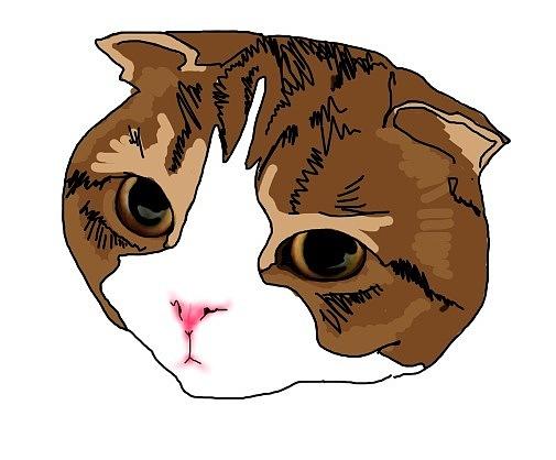 手绘小动物小猫小浣熊牛耕图片