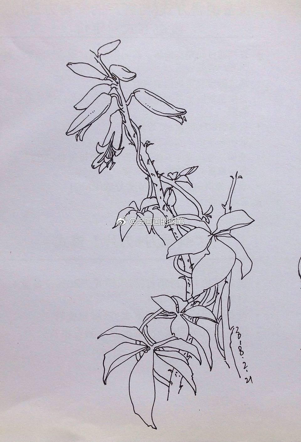 钢笔手绘-阳台的植物
