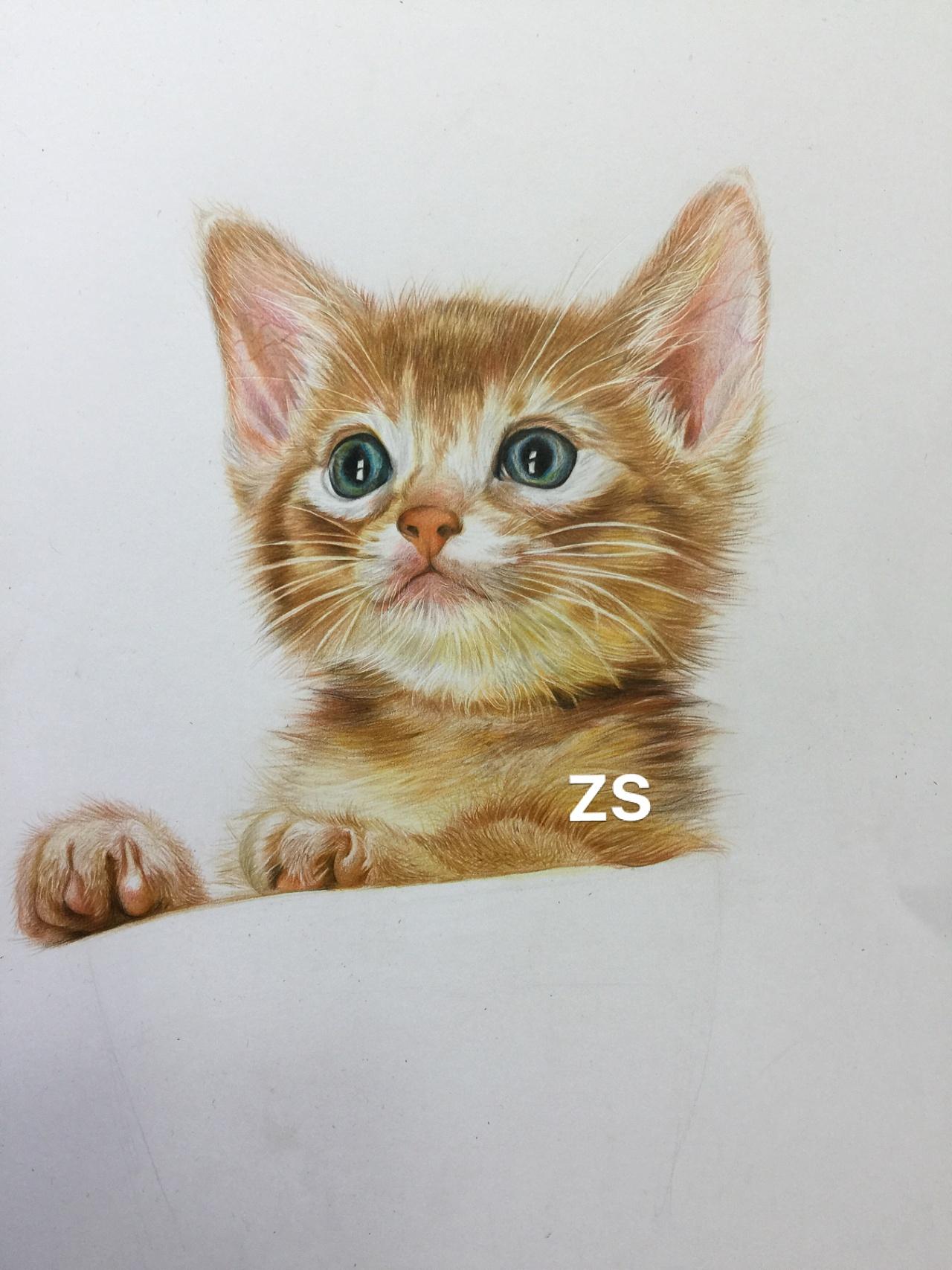 可爱彩铅_彩铅小猫咪|纯艺术|彩铅|ZSZSZSWT - 原创作品 - 站酷 (ZCOOL)