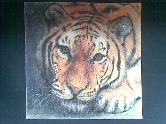 彩铅手绘小老虎