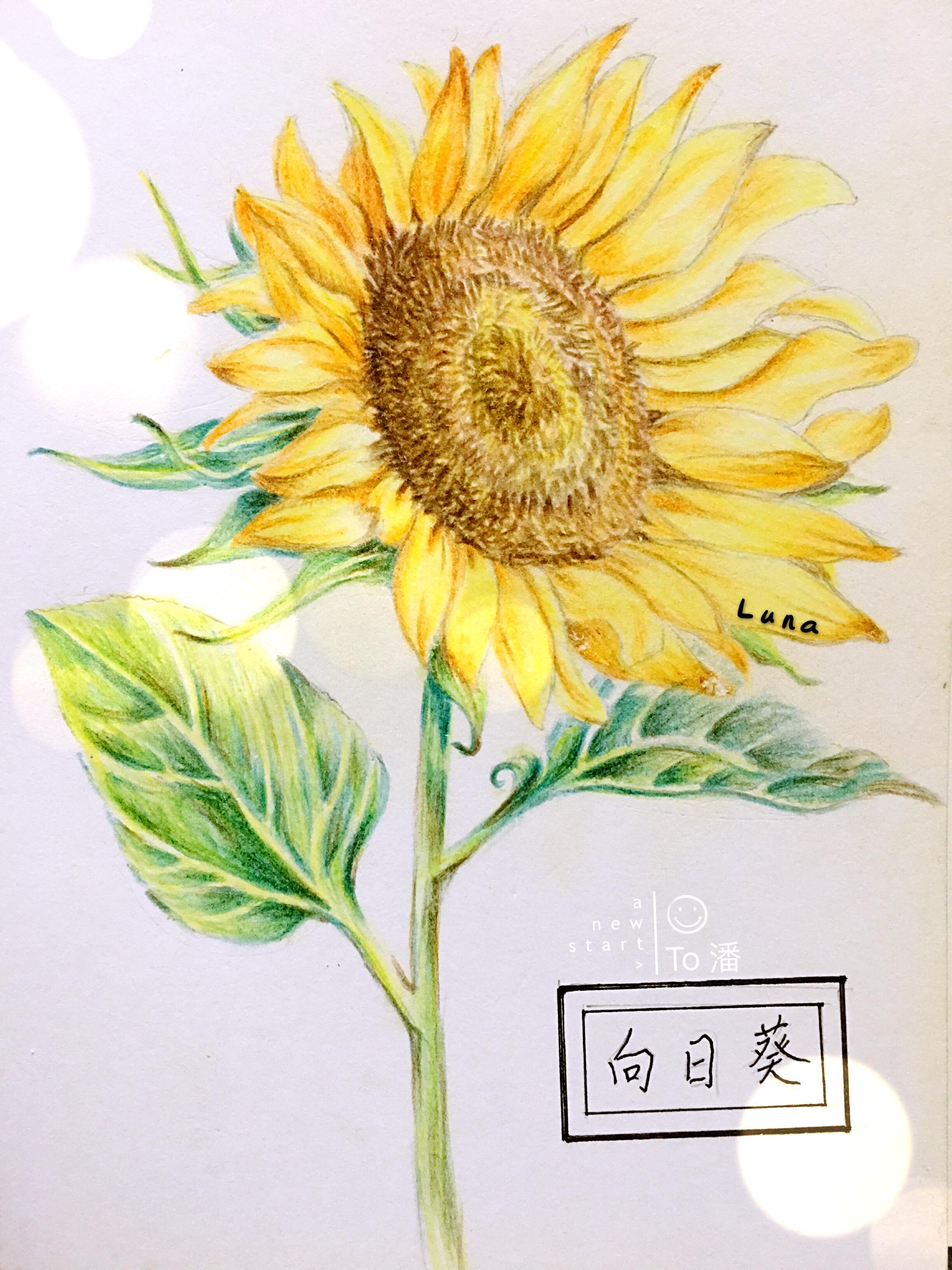 彩铅手绘练习
