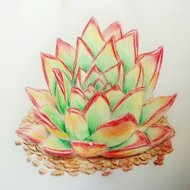彩铅多肉植物