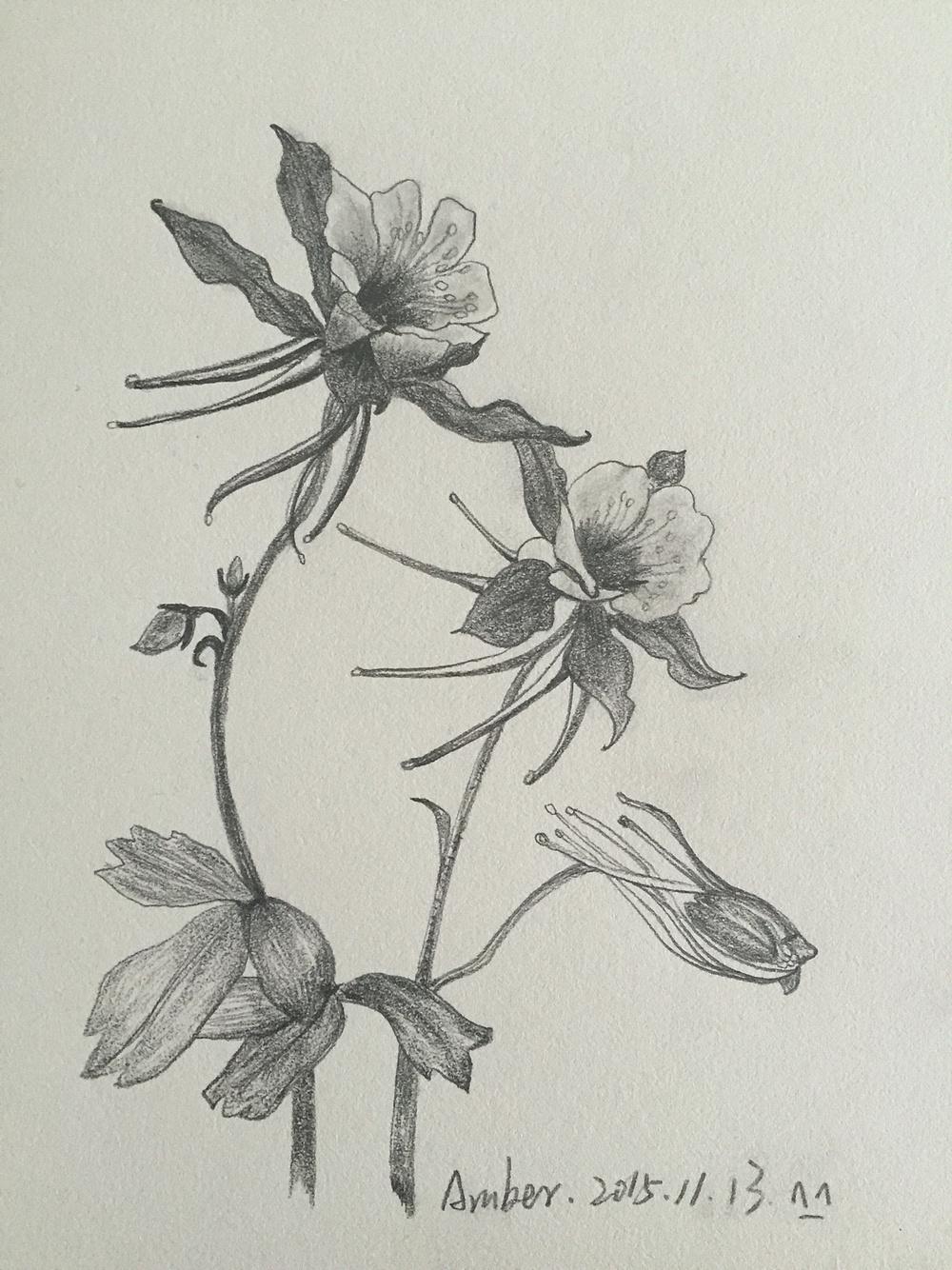 临摹素描-花卉
