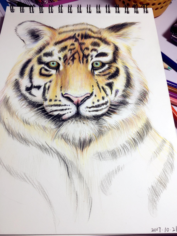 彩铅画《老虎》