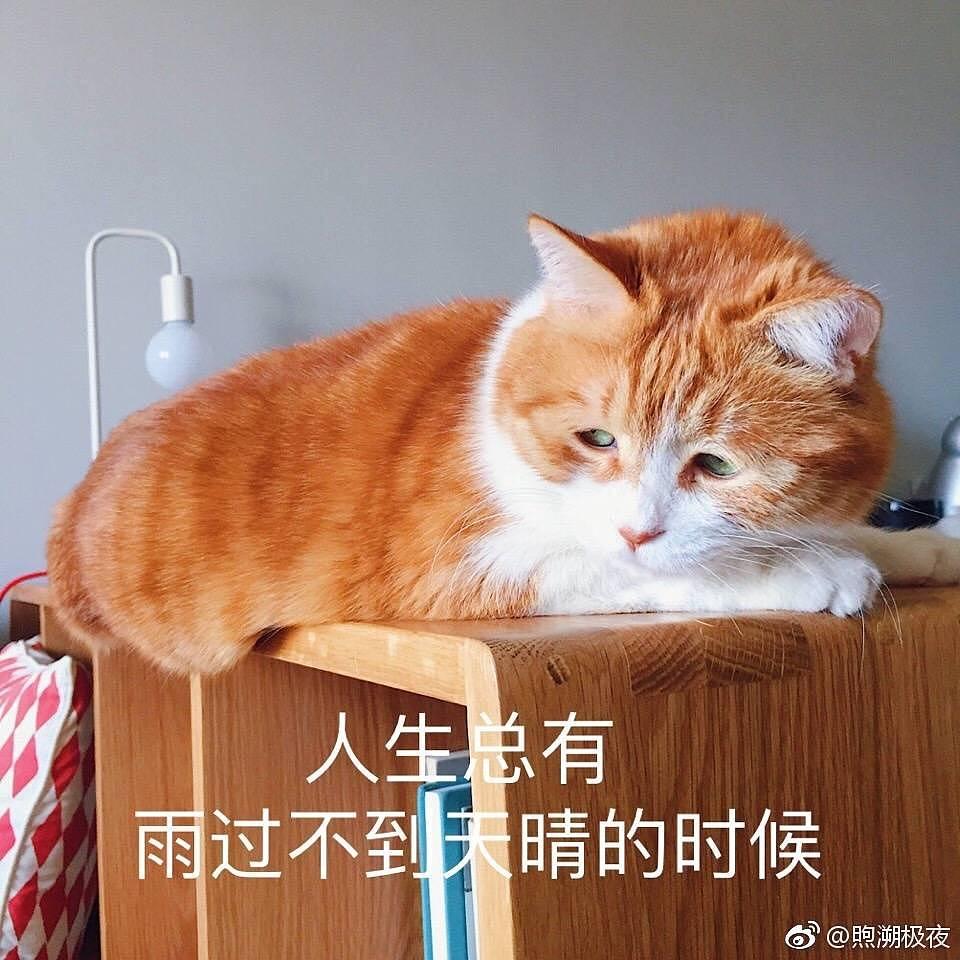 橘猫表情包图片