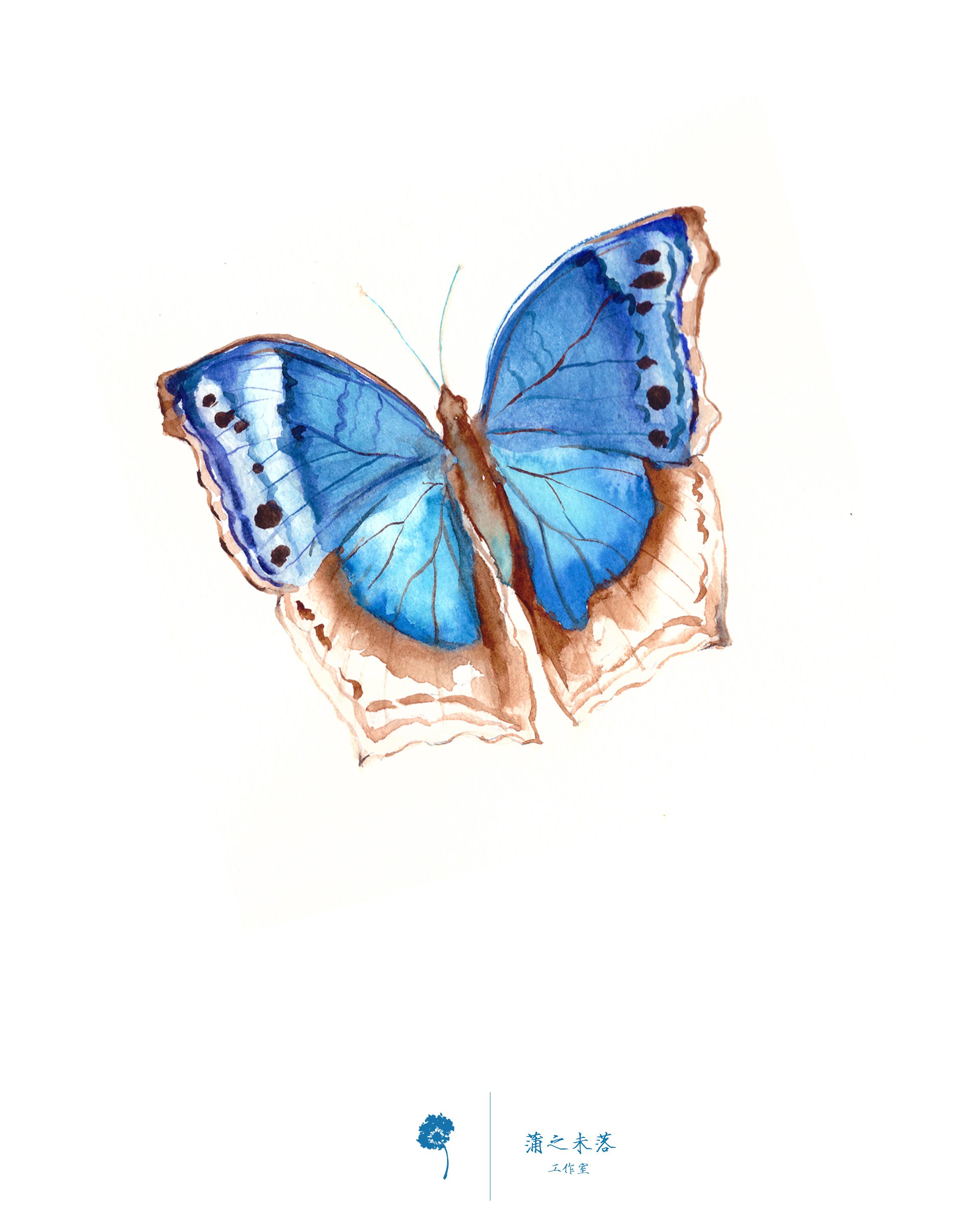 水彩手繪--蝴蝶