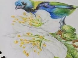 彩绘花鸟图