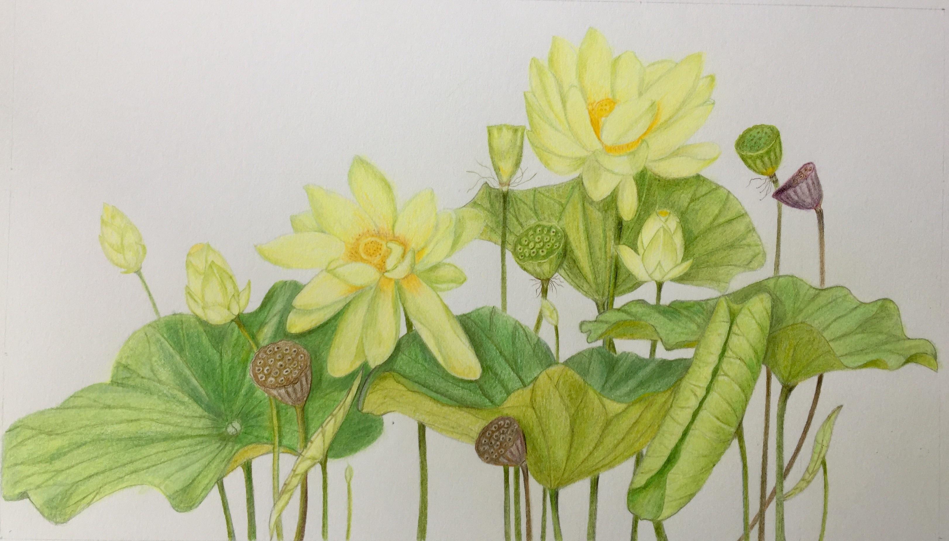 暖色 彩铅花卉图片
