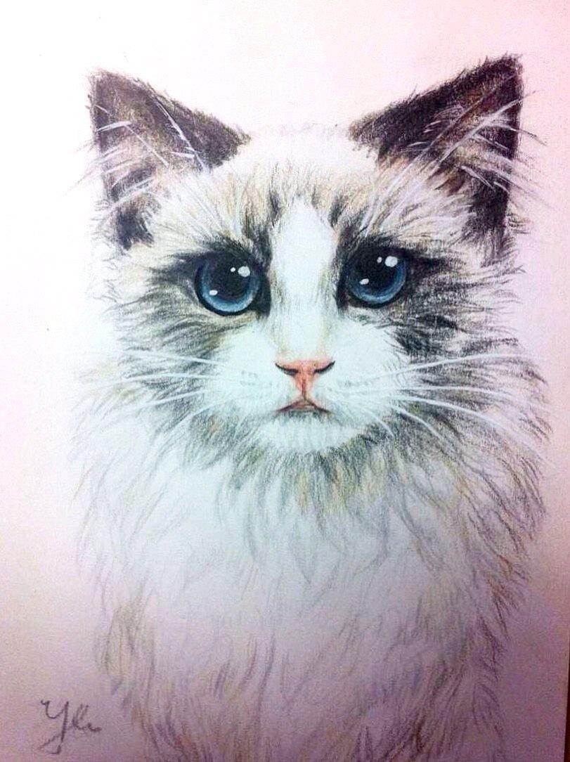 彩铅软萌猫